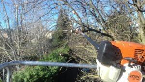 coupe branche arbre à beaune