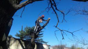 finition coupe arbre beaune